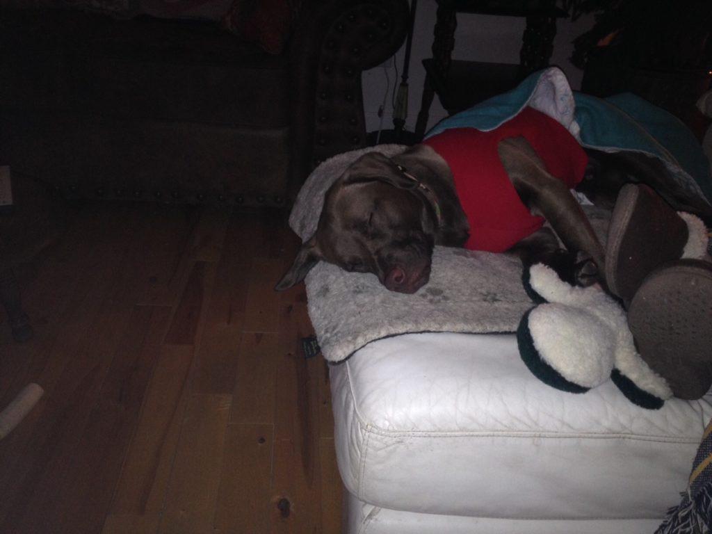sleeping Seymour